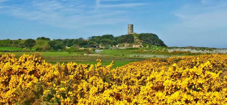 Flower field in Guernsey