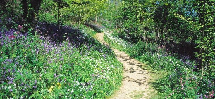 photo of Bluebell Wood Path