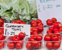 Guernsey tomatoes