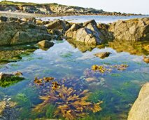 L'Eree rockpools in Guernsey